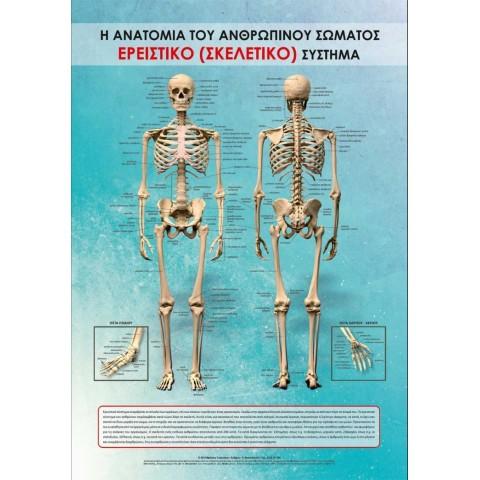 Αφίσα σκελετικού συστήματος 100x70 cm πλαστικοποιημένη (Εκδόσεις Τσακνάκης Νίκος)